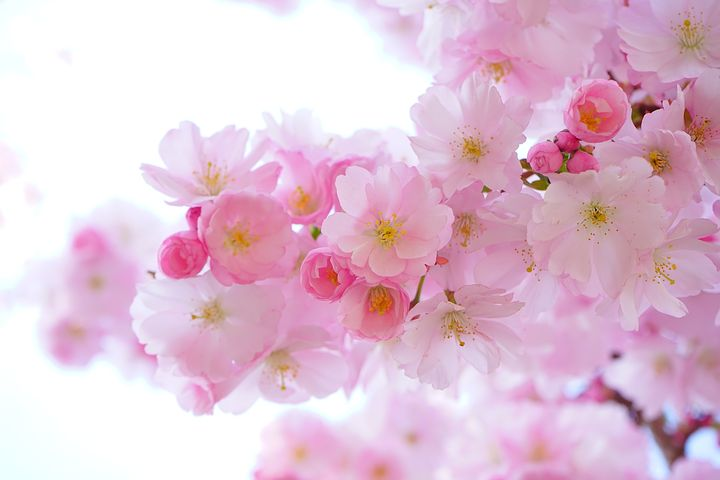 中国上海での小学生の春休みの過ごし方|日系塾の春期講習などの紹介